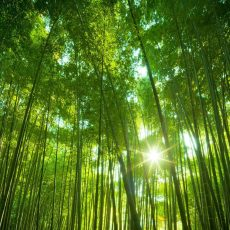 bamboo-free-744736-forest