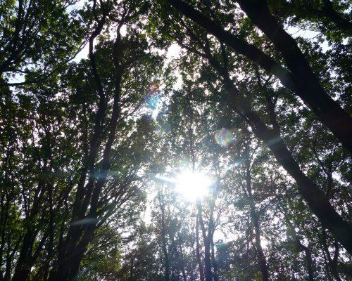 lumiere-magique-arbres-broceliande